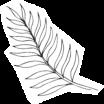 Noosa-Palm-Leaf