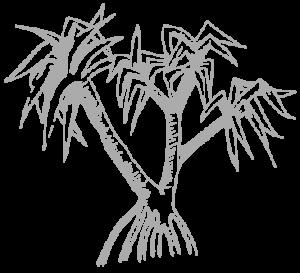 Palm-Tree-Noosa