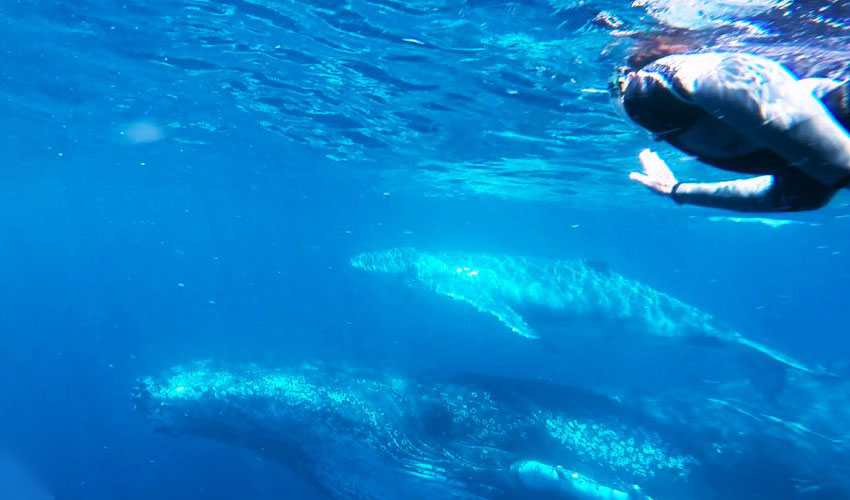 Go swimming with the whales in Noosa